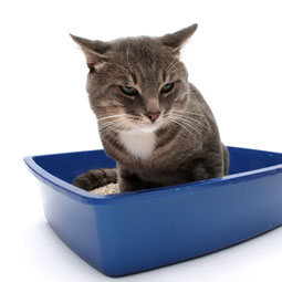 Cat Bladder Infections Can Be Painful For Your Feline